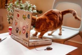 Gadget : ปัญหาแมวนั่งบนโน้ตบุ๊คจะหมดไป (มั้ง) ด้วยของเล่นใหม่ชิ้นนี้นี่เอง....